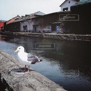 【北海道の旅写真】小樽運河⚓︎ - No.993729