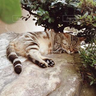 【江ノ島の旅写真】猫の島🐈の写真・画像素材[1014645]