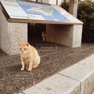 【江ノ島の旅写真】猫の島🐈 - No.1014672