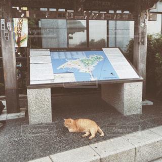 【江ノ島の旅写真】猫の島🐈の写真・画像素材[1014679]
