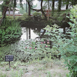 【秋田山形の旅写真】中尊寺🙏🏼✨の写真・画像素材[1150622]