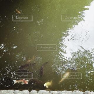 【秋田山形の旅写真】善宝寺🙏✨の写真・画像素材[1279880]