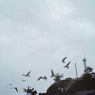 【秋田山形の旅写真】加茂水族館🌊🌝の写真・画像素材[1291111]