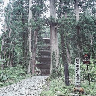 【秋田山形の旅写真】羽黒山⛰の写真・画像素材[1343310]