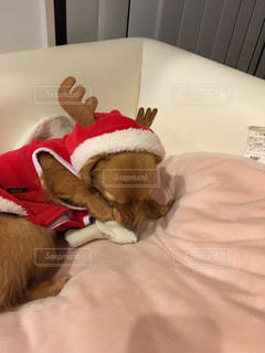寝そうな犬の写真・画像素材[969350]