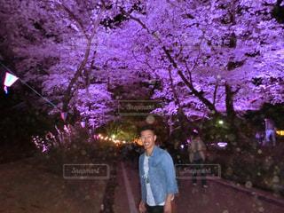夜桜の写真・画像素材[974280]