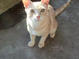 グアムのネコの写真・画像素材[1009248]