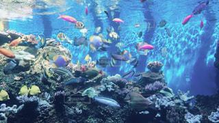 ハワイの水族館の写真・画像素材[1009254]