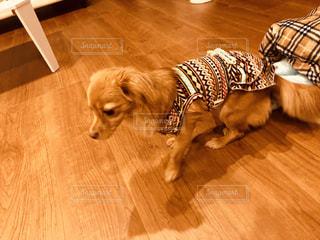堅い木製の床の上に横たわっている犬の写真・画像素材[1623525]