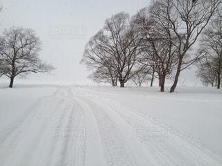 冬の写真・画像素材[31930]