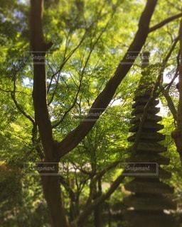 自然の写真・画像素材[87923]