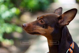 愛犬と公園を散歩の写真・画像素材[967770]