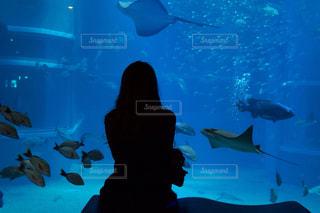 水族館の写真・画像素材[970288]