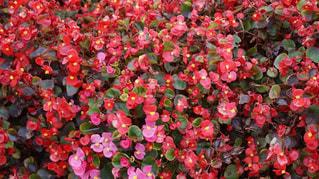 花の写真・画像素材[967154]