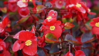 近くの花のアップの写真・画像素材[967155]