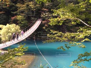 夢の吊り橋の写真・画像素材[967254]