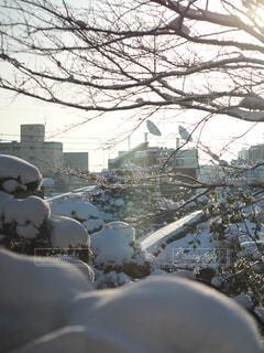 朝焼けの雪景色の写真・画像素材[972664]