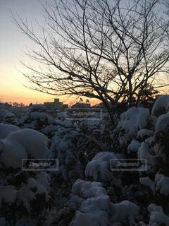 朝焼けの雪景色の写真・画像素材[972667]