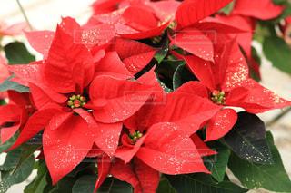 赤い花 - No.967700