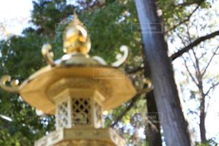 近くの木のアップの写真・画像素材[967911]