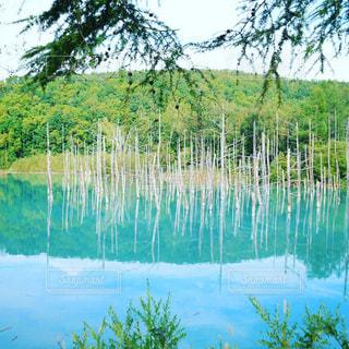 北海道の青い池 - No.967502