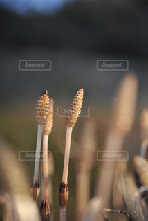 春の訪れの写真・画像素材[970926]