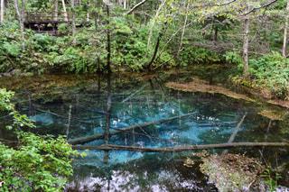 神の子池の写真・画像素材[1010972]