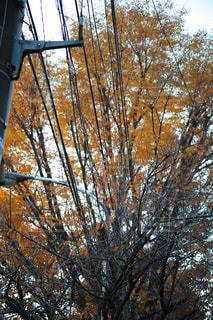秋の街路樹 - No.967477