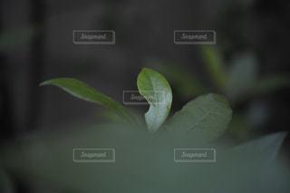 近くの植物のアップ - No.967638