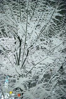 雪化粧の木 - No.972078
