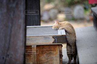 賽銭箱と猫の写真・画像素材[967526]