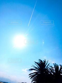晴れた日にヤシの木の写真・画像素材[712230]