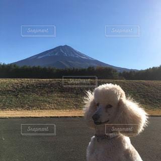 富士山と犬の写真・画像素材[967884]