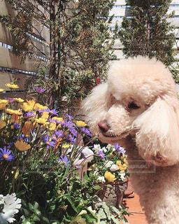 花と犬の写真・画像素材[967887]