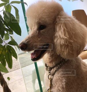 近くに犬のアップの写真・画像素材[968947]