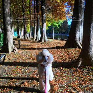 公園の犬の写真・画像素材[968950]