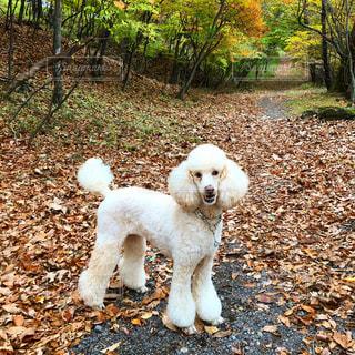 森の中の犬の写真・画像素材[968951]