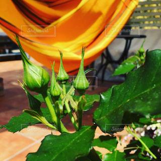 近くの緑の植物をの写真・画像素材[968999]