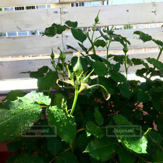 庭園の緑の植物の写真・画像素材[969002]