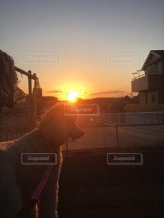 日没の前に立っている犬の写真・画像素材[969167]