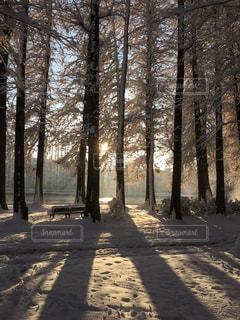 雪の側に木にパス カバー フォレストの写真・画像素材[972947]
