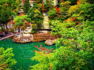 背景の水の庭 - No.967922