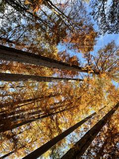 紅葉の秋の写真・画像素材[3927976]
