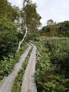 栂池高原の写真・画像素材[3929601]