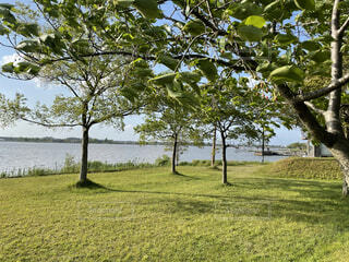 公園の木の写真・画像素材[4716989]