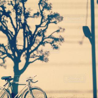 自転車散歩♪の写真・画像素材[973210]