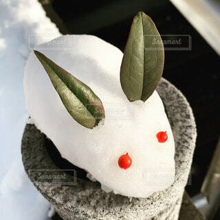 雪うさぎの写真・画像素材[3670532]