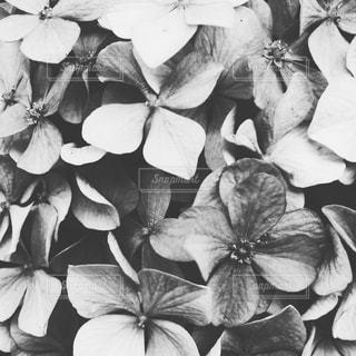 色のない世界の写真・画像素材[968538]