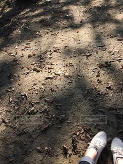 散歩 - No.971260