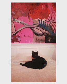 猫の黒と白のベッド - No.968834